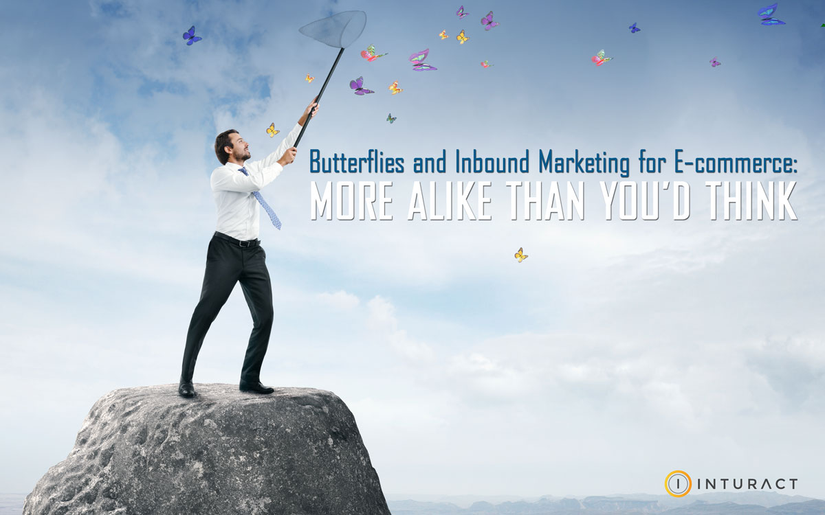 Butterflies and Inbound Marketing: More Alike Than You'd Think